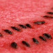 close-up of a ripe watermelon - stock photo