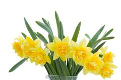 Stock Photo of bouquet of blooming narcissus