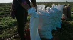 Filling Sack In - stock footage