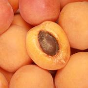 ripe apricots - stock photo