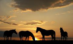 Stock Photo of horses