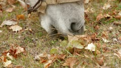 Donkey Eating Stock Footage