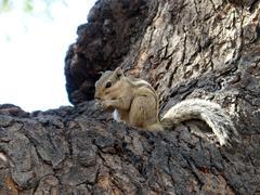 A smart squirrel Stock Photos