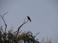 Lonely Bird Stock Photos