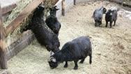 Animals on the farm Stock Footage