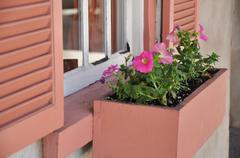 Charming wooden shutters and window box with flowers in St. Augustine Stock Photos