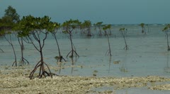 Mangrove trees on the sand island Nogas in the Philippines during low tide Stock Footage