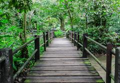 a timber boardwalk leading away into the forest - stock photo