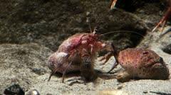 Marine life - Crabs Stock Footage