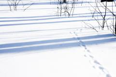 Animal tracks in the snow-clearing in the forest. Stock Photos