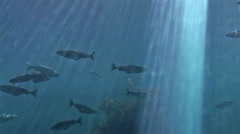 Fish - Marine life Stock Footage