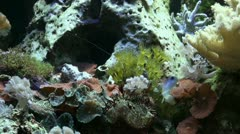 Coral reef close up with damselfish and sea anemones Stock Footage