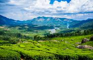 Tea plantations in india Stock Photos