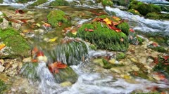 Wonderland. Little waterfalls in a peaceful wood. Stock Footage
