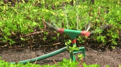 Water sprinkler irrigating a lawn. Stock Footage