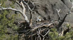 eagles nest - stock footage