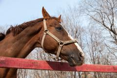 Horse portrait in spring in the paddock Stock Photos