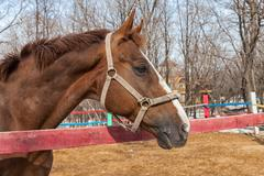 horse portrait in spring in the paddock - stock photo