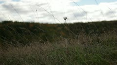Pan from dry grass in wind to fields and hills in fall color - stock footage