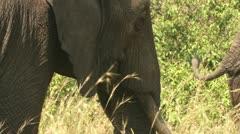 Elephant's head Stock Footage
