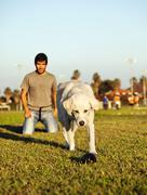 labrador running after chew toy in park - stock photo
