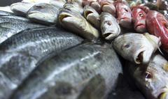 Assortment of fishes Stock Photos