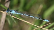 Blue dragonfly close-up Stock Footage