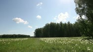 Meadow and forest in summer Stock Footage