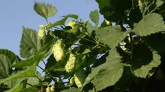 Hop Stock Footage