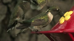 Ruby-throated Hummingbird's gorget is not black -- usually Stock Footage
