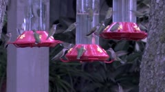 Ruby-throated Hummingbirds desperately swarm feeders 4 Stock Footage