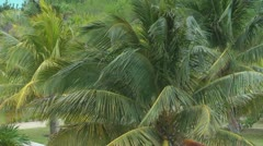 Slow Motion Palm Leaves Stock Footage