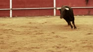 Stock Video Footage of Powerful spanish bull, bullfight arena