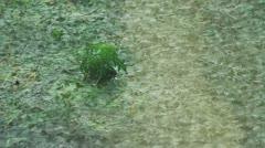 Green Plant In Heavy Rain Stock Footage