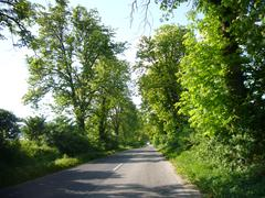 Country Road with windy trees Stock Photos