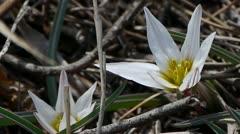 White wildflower swing in wind. Stock Footage