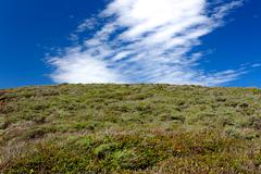 hill of green foliage lookup up toward brilliant blue sky with clouds.5 - stock photo