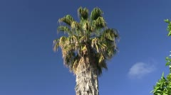 Palm tree, citrus Stock Footage