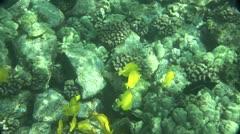 Little Yellow Fish to Keala Kekua Monument in Hawaii Stock Footage