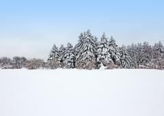 Calm winter forest after the snowstorm - stock photo