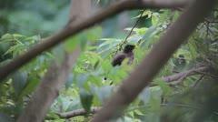 Squrrel and bird on tree Stock Footage
