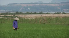 Asian Woman Farming Rice Field - stock footage