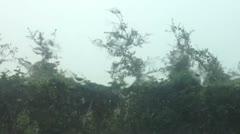 Rain - stock footage