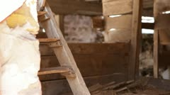 Abandoned 1910 rural homestead - barn interior stairs and walls Stock Footage