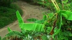 Banana tree and river Stock Footage