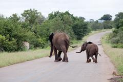 Elephant family is crossing the road - stock photo