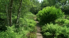 Small footpath, stepping stones in park along  Royal Fern + pan Stock Footage