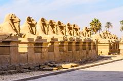 Stock Photo of rams in the karnak temple in luxor, egypt