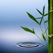 bamboo grass with dew droplets. abstract environmental backgrounds - stock illustration
