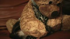 Kitten and teddy bear Stock Footage